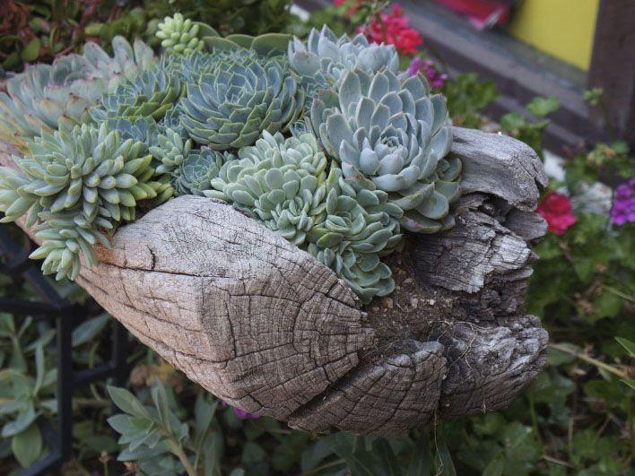 286 Best Images About SUCCULENTS Garden Ideas On Pinterest
