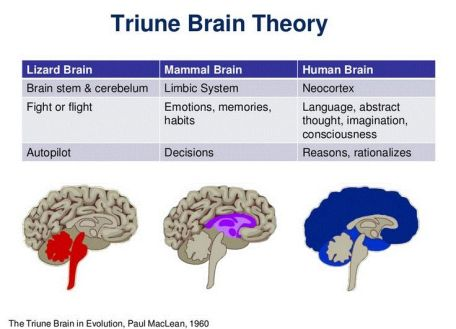 The Triune Brain Emotional Fitness