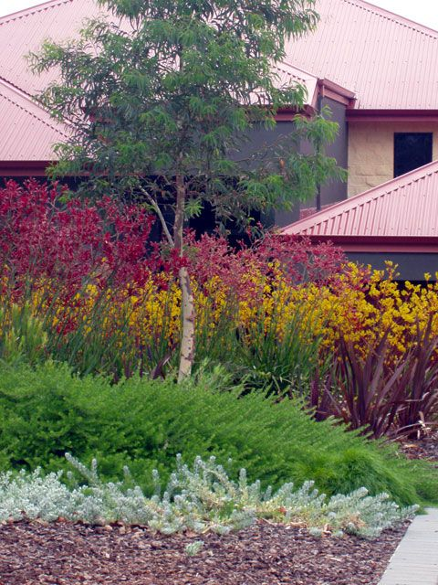 69 Best Images About Front Garden Ideas On Pinterest Kangaroo