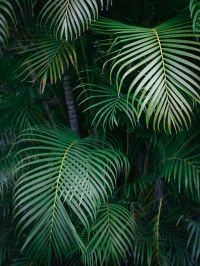 The 25+ best Tropical plants ideas on Pinterest   Tropical ...