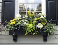 Decorating  Shade Plants For Window Boxes