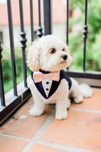 25+ best Dog Tuxedo ideas on Pinterest | Boy dog, Dog ...
