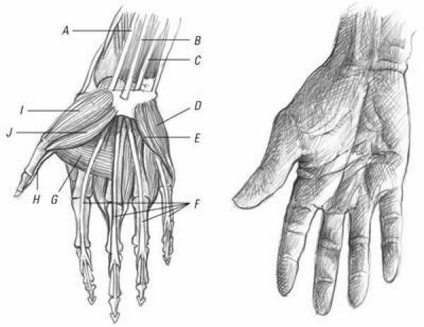 Drawing of hands by Ken Goldman. Resources for learning
