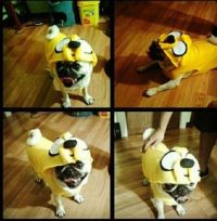 Idea for Zooey's Jake the dog costume to go with Stevens ...