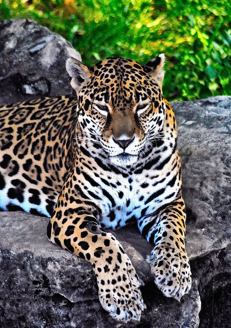 #Big Cat Country  Like,Repin,Share, Thanks!