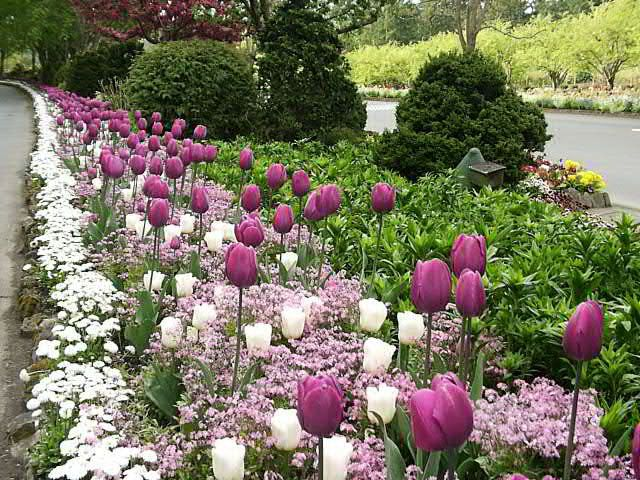 25 Best Ideas About Garden Bulbs On Pinterest Planting Bulbs