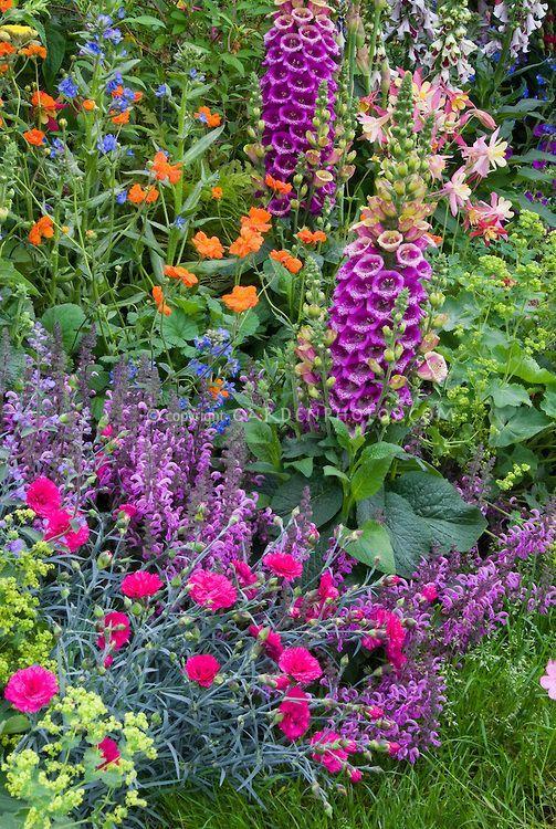 Mixed Perennials Garden euphorbia spurge dianthus