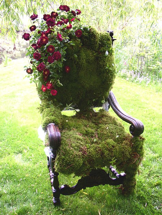 25 Best Ideas About Moss Plant On Pinterest Moss Garden Moss