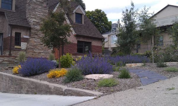 drought tolerant landscaping design