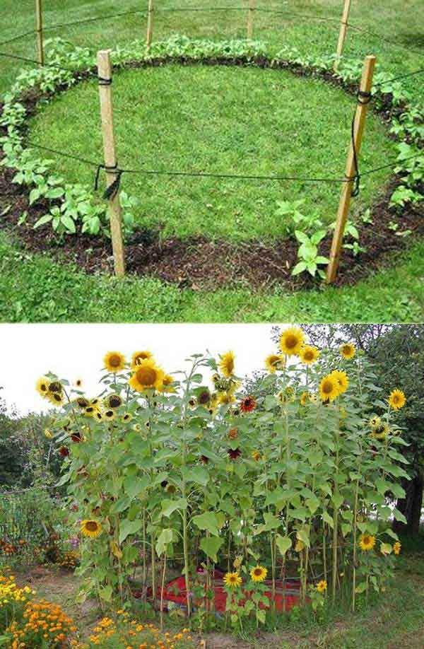 25 Best Ideas About Sunflower House On Pinterest Sunflower