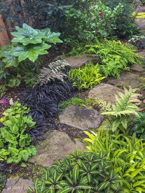 25 Best Ideas About Fern Plant On Pinterest Ferns Garden Ferns