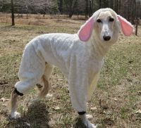 Large Dog Woof In Sheeps Clothing Costume | Large Dogs ...