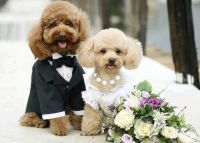 Dogs dressed as bride and groom | Dogs in costumes ...