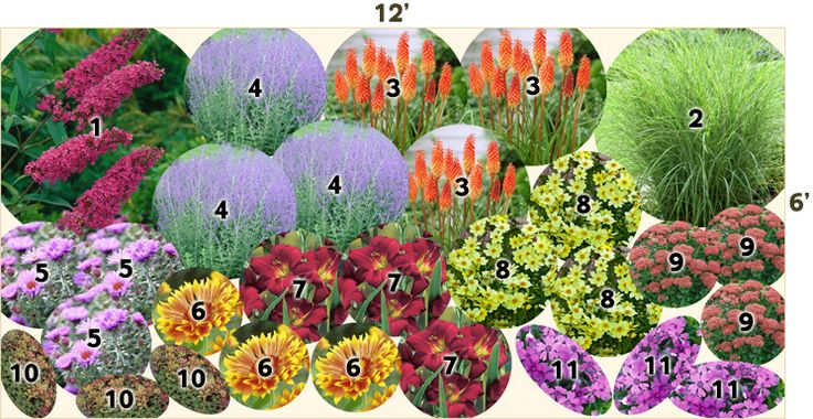 Shade Plants; Perennials For Zone 5; Garden Plans Butterfly Bush