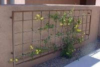 25+ Best Ideas about Metal Trellis on Pinterest | Metal ...