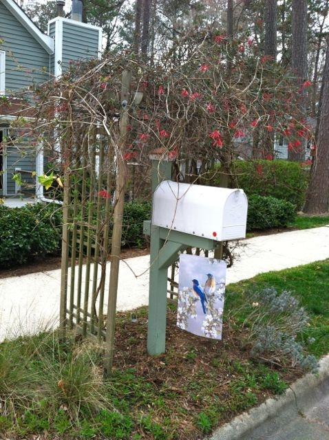 1000 mailbox