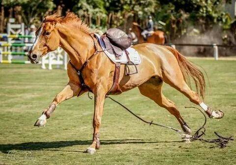 124 best Horses. my spirit animal. images on Pinterest