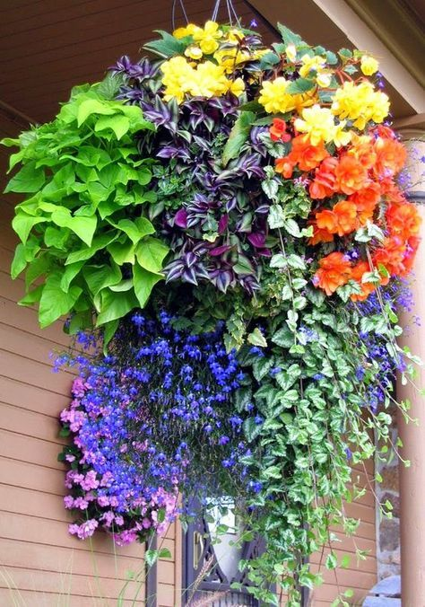Best 20 Hanging Baskets Ideas On Pinterest Hanging Basket