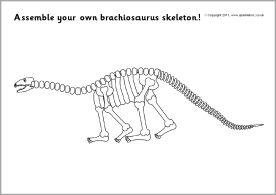Skeletons and Dinosaurs on Pinterest