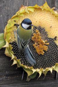 17 Best images about Backyard Birds on Pinterest | Wild ...