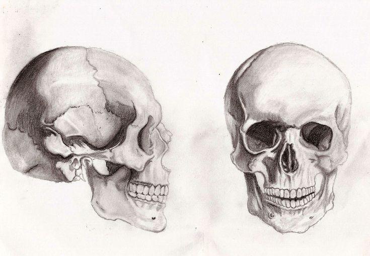 Skull Anatomy Sketch 4k Hd Desktop Wallpapers For Desktop Smartphone