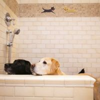 Dedicated dog shower in the garage BRILLIANT idea! | For ...
