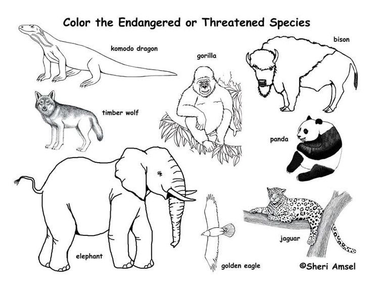 25+ best ideas about Endangered animals lessons on