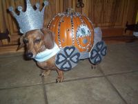374 best images about Dachshunds in costume on Pinterest ...
