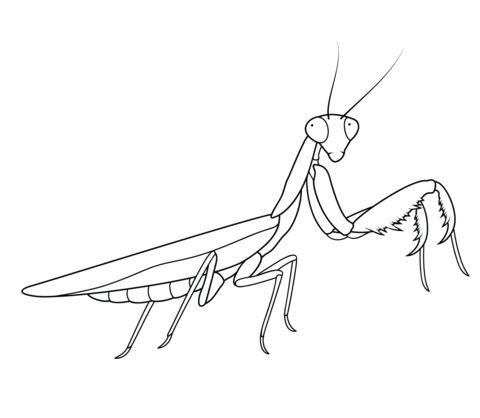 praying mantis ideas
