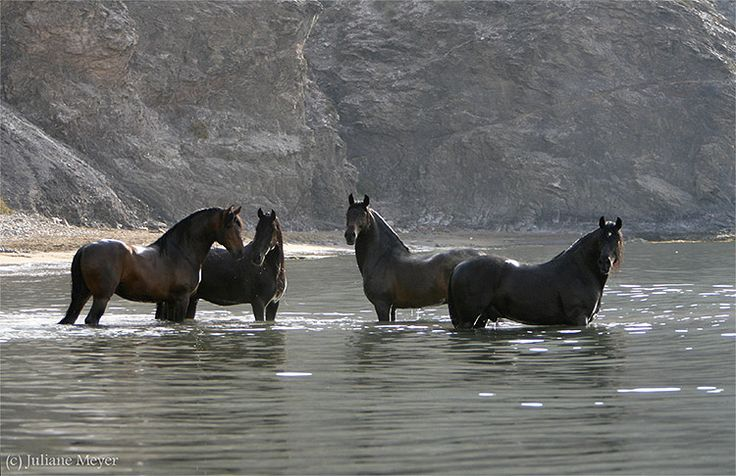 10 images about Horses in Water on Pinterest  White