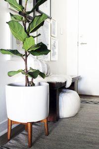 Indoor Plants Decoration