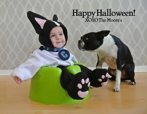 17 Best ideas about Boston Terrier Costume on Pinterest