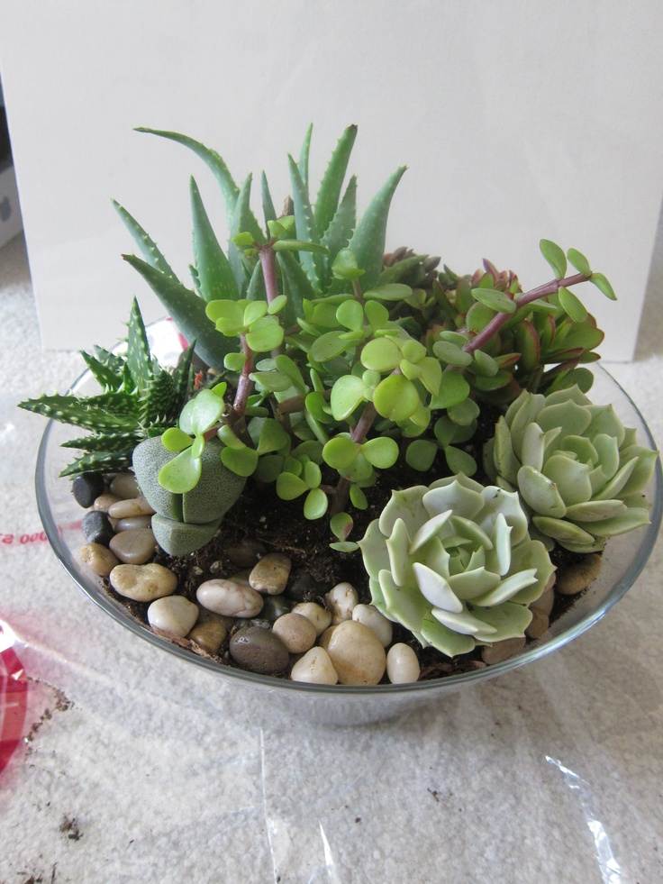 Potted Succulents As Floral Table Decoration To Reflect