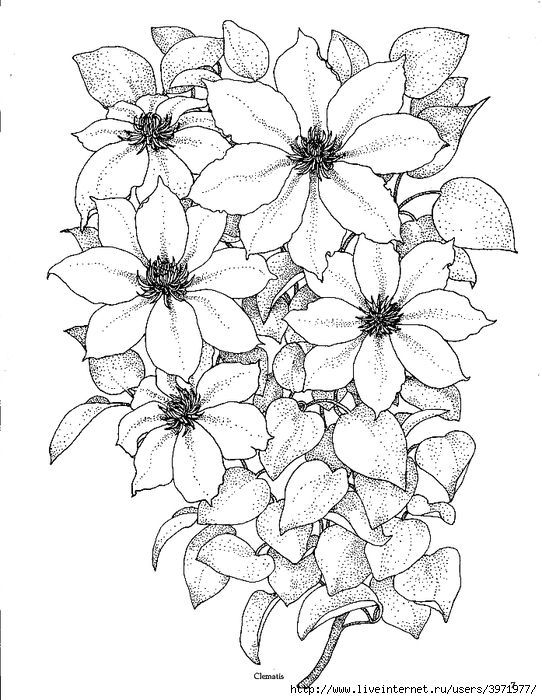 453 best images about Floral Patterns/Templates on