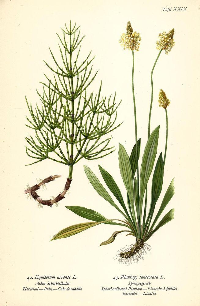 Die 4194 besten Bilder zu Botanik auf Pinterest  botanische Zeichnungen botanische