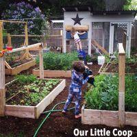 urban farm, backyard chickens, urban homestead, back to ...