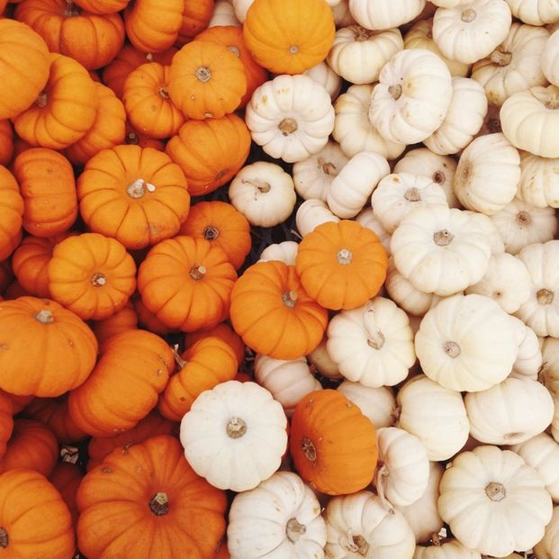 Fun Fall Wallpaper High Def 25 Best Images About Fall Background On Pinterest Fall