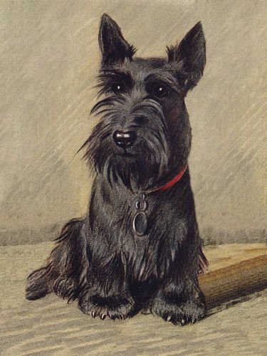 17 Best Images About Scotties In Food Amp Art On Pinterest