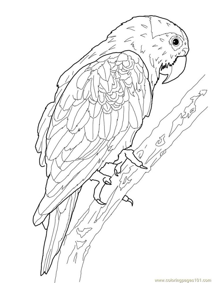 366 best images about Adult Coloring Pages: Birds on