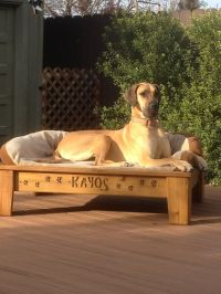 Raised dog bed | Keep it clean | Pinterest | Xl Dog Beds ...