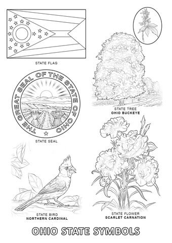 Coloring pages, Ohio and Symbols on Pinterest