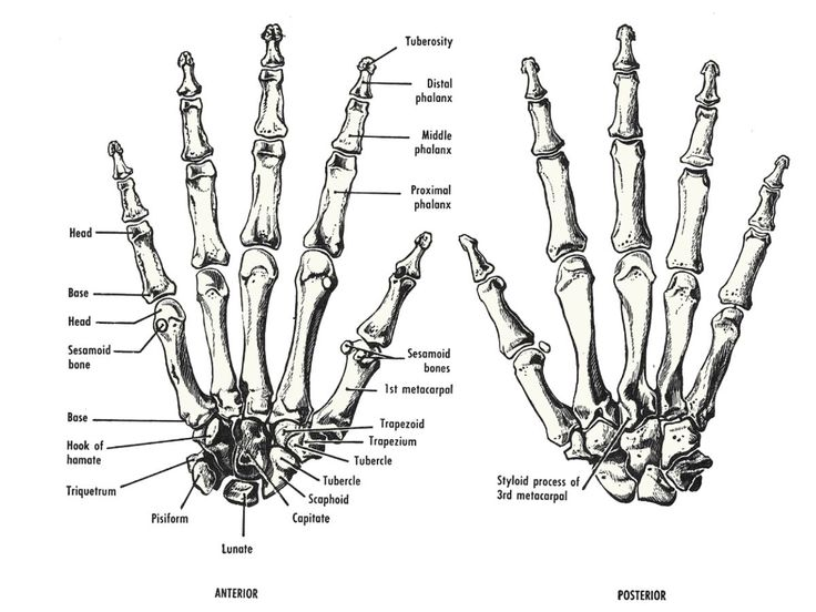 1000+ images about The Human Hand/Arm on Pinterest