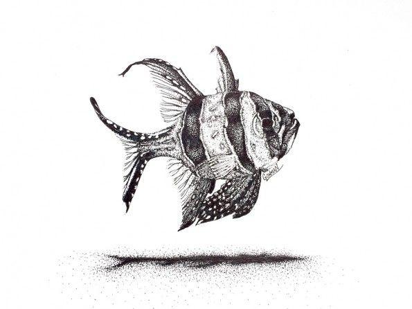 17 Best images about BANGGAI CARDINAL FISH on Pinterest