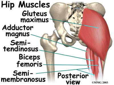 78 Best Images About Relevant Anatomy Of Hip And Lower