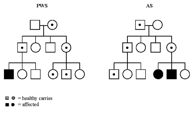 Hypothetical pedigrees describing the inheritance of