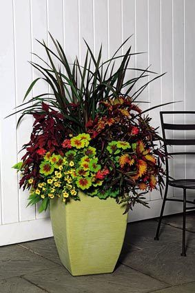 25 Best Ideas About Fall Container Plants On Pinterest Fall