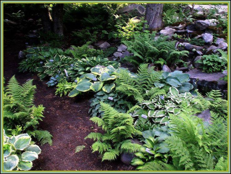 92 Best Images About Hosta Heaven On Pinterest Hosta Gardens