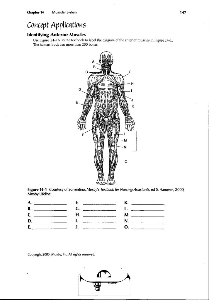 Human Anatomy Labeling Worksheets Human Body Muscle
