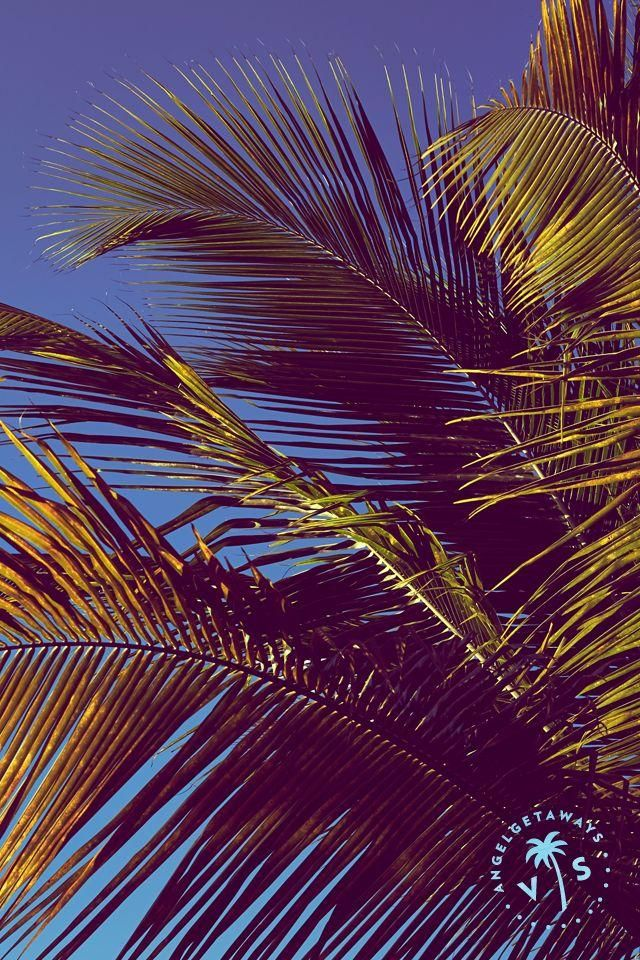 Iphone X See Through Wallpaper Palm Trees Amp Clear Skies Sigh Get Your Desktop Tablet