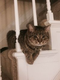 212 best images about Cats-Stairway to Heaven... on ...